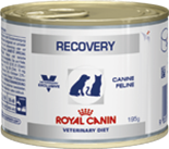 ROYAL CANIN RECOVERY FEL/CAN 195